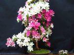 "Rhododendron indicum ""Azuka"""
