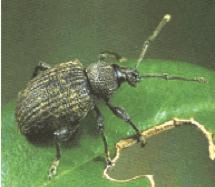 Taxuskever Pl. 3