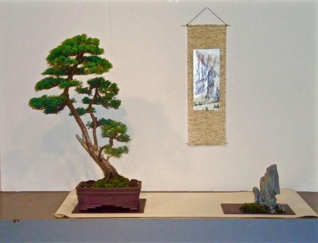 Juniperus Gerrit Schwagermann, 11-2008