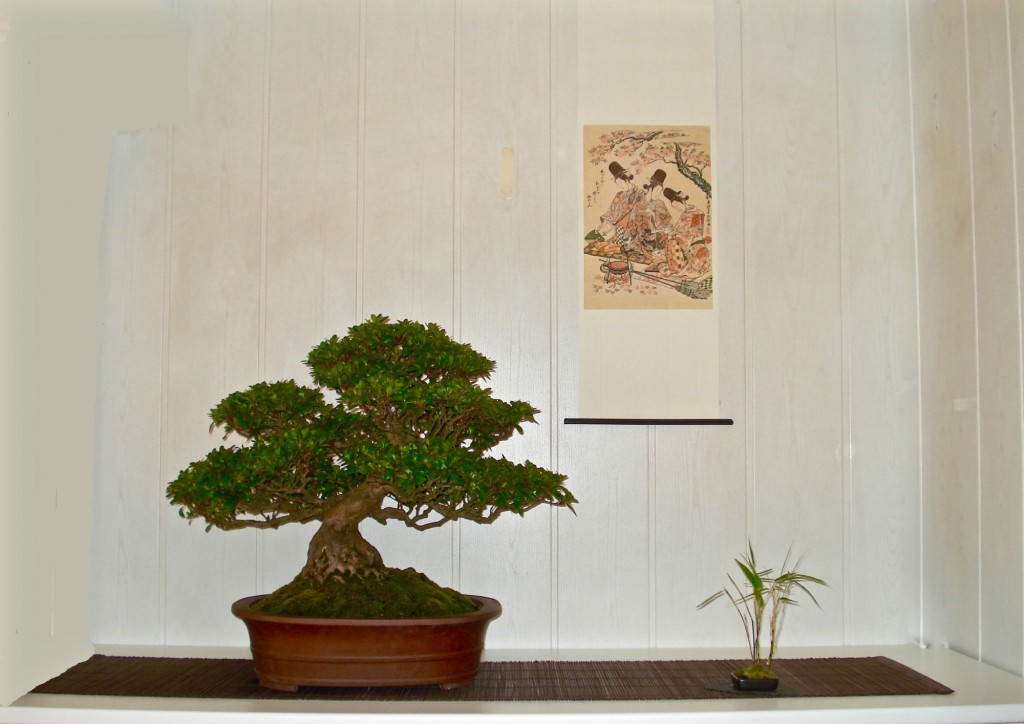 Rhododendron indicum, Anton v.d.Zande
