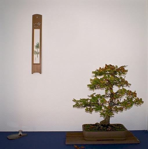 Carpinus turczaninowii Koreaanse haagbeuk(steenbeuk) Eric ter Lingen