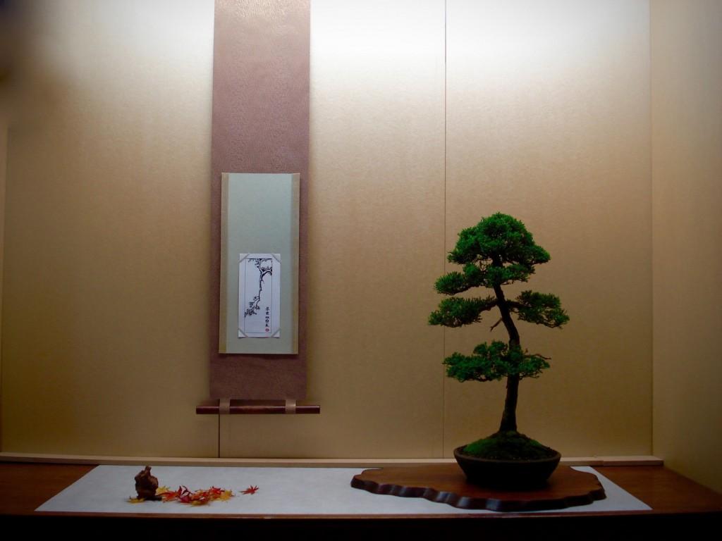 Juniperus Gerrit Schwagerman 14-11-2009