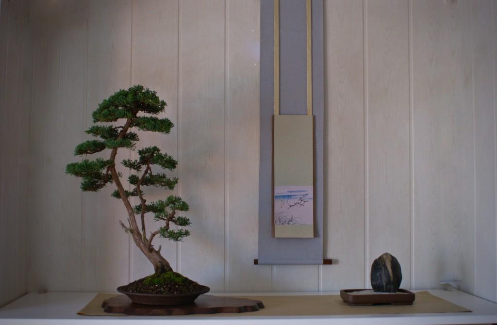 Boom: Juniperus, Gerrit Schwagerman 8-11-2008
