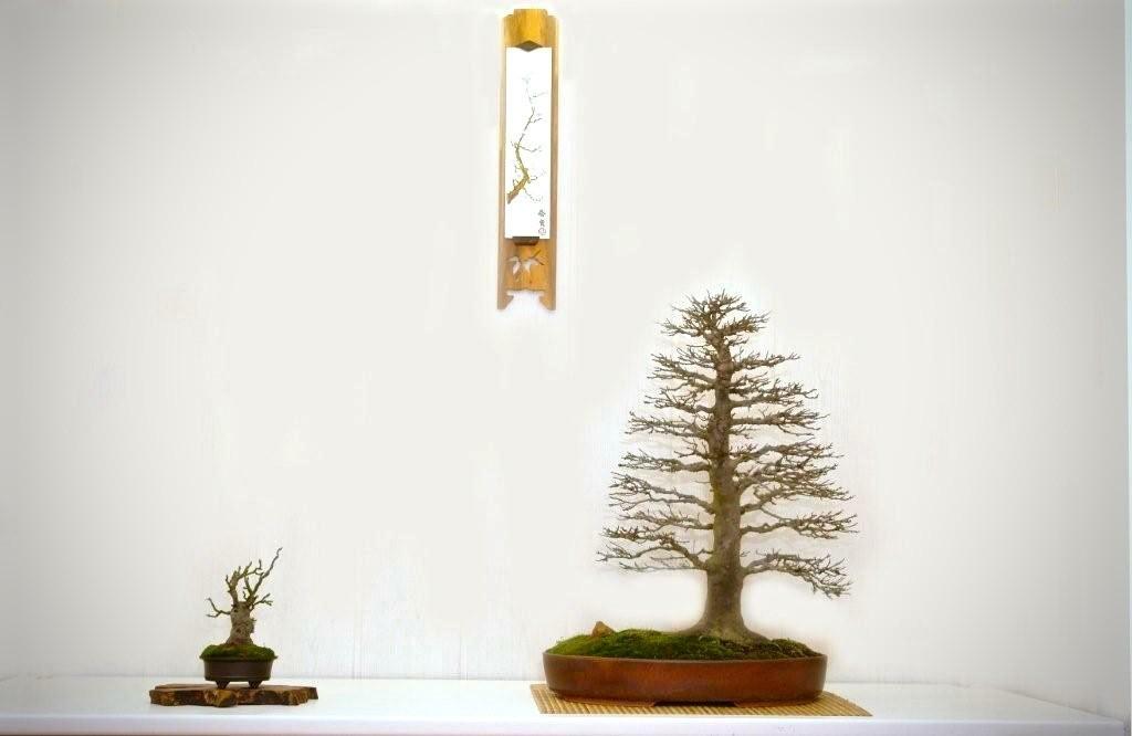 Acer palmatum Beugerianum, accent Malus, Leen v Nieuwkerk