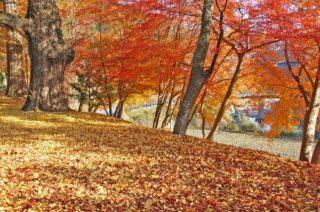 Kleurenpracht in een bos