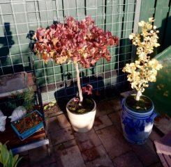 Hanny de Winter herfstkleuren